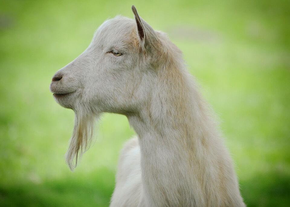 Заботливая женщина хочет его накормить, когда он не хочет кушать.  Он переварить не может: «она все для него, а он козел неблагодарный!».