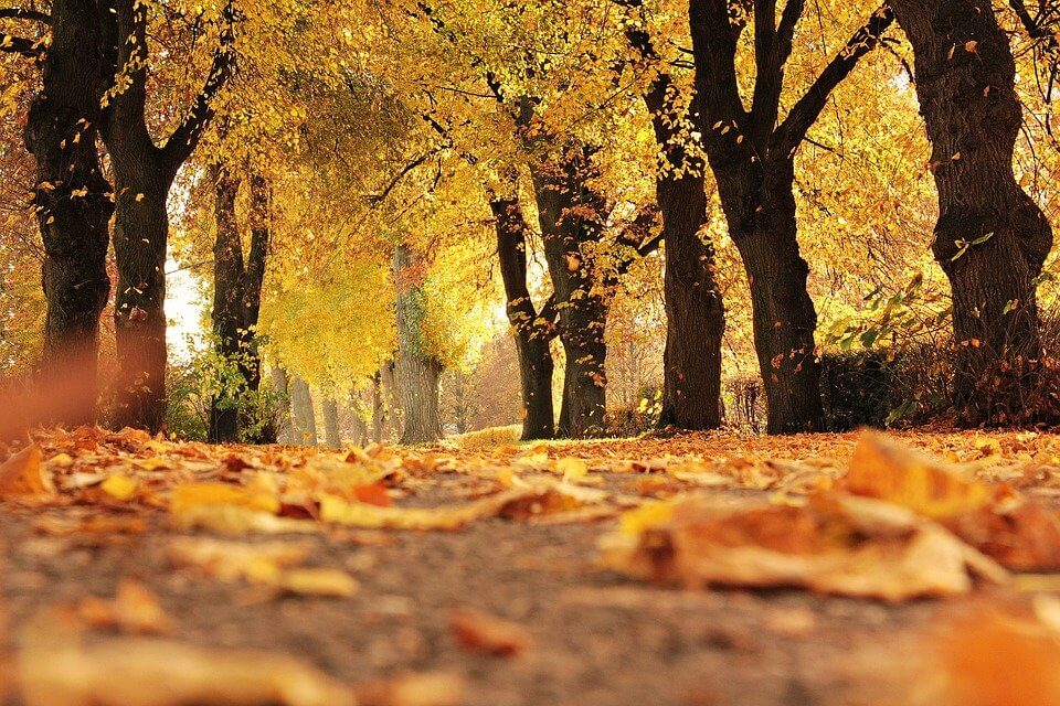 Начинаю осознавать сейчас - ноябрь глубокий по смыслу. Ноябрь пограничный и противоречивый месяц - он забирает и даёт. Забирает время солнечного дня, но даёт уют и комфорт домашней неги.
